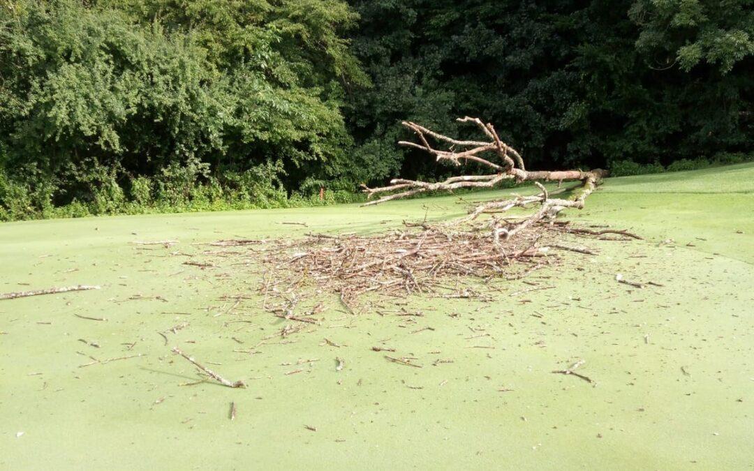 Grün Loch 18